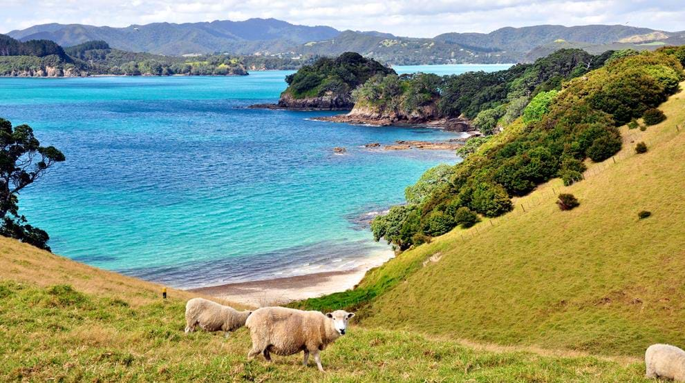 Smukke Bay of Islands - Bilferie i New Zealand