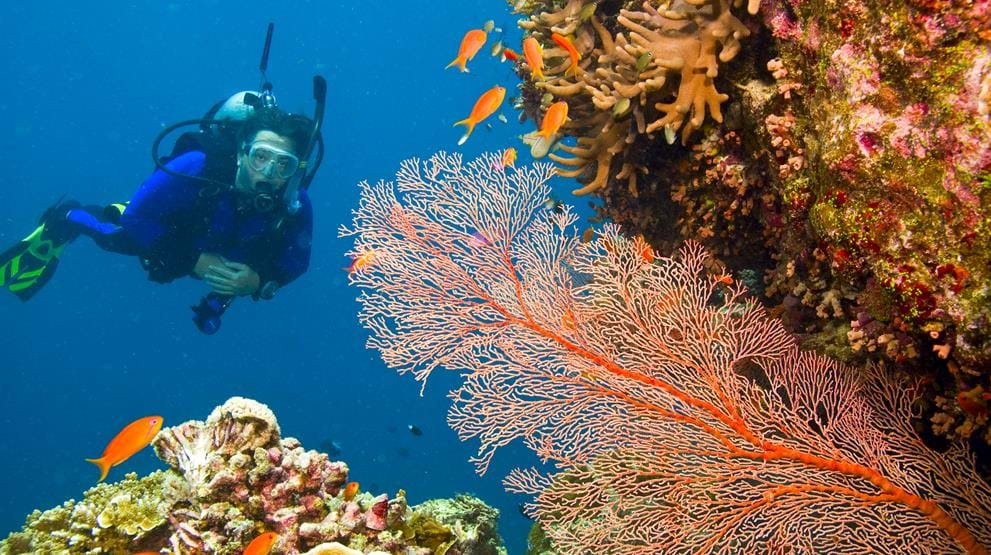 Dyk under havoverfladen ved Great Barrier Reef