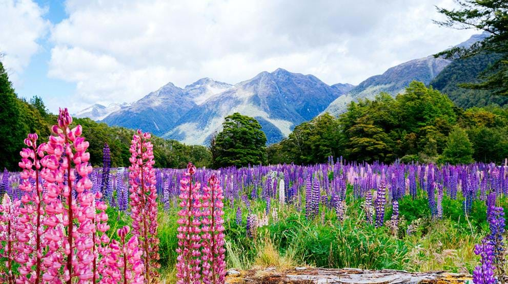 Fiorland National Park, New Zealand
