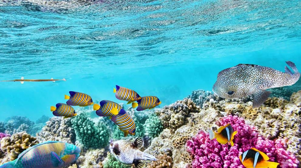 Se de farverige fisk ved Great Barrier Reef