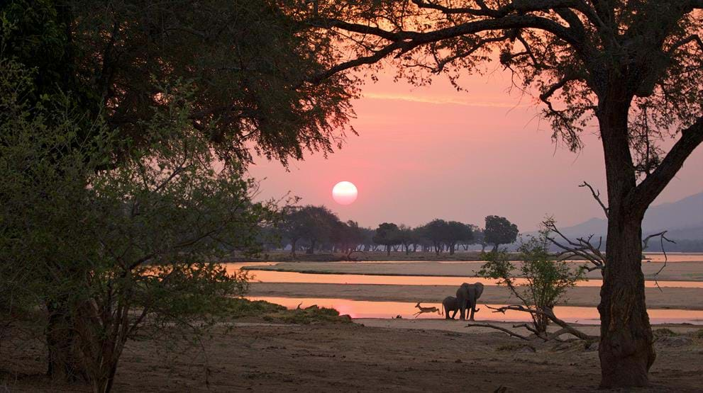 Safari i Botswana | Mana Pools National Park