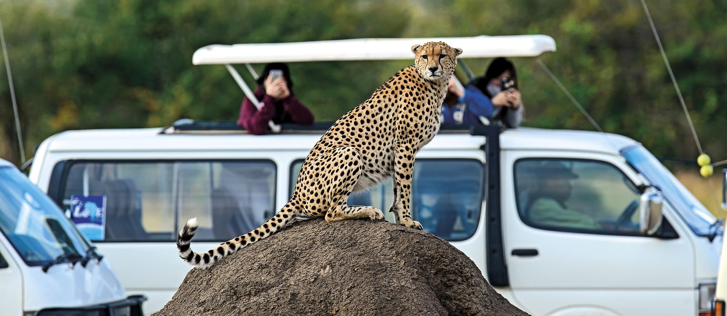 Hvornår skal man tage på safari?